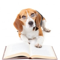 Beagle Bookkeeping